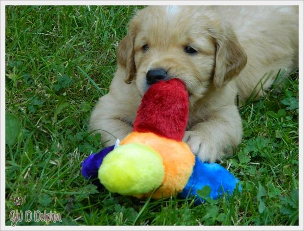 Spielzeug1