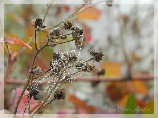 DSCN9519_Blog