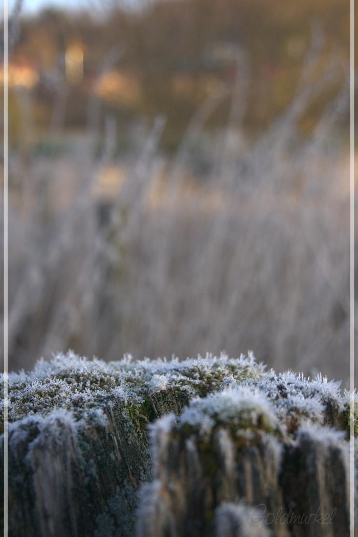 2019_02_17_Landschaft_5
