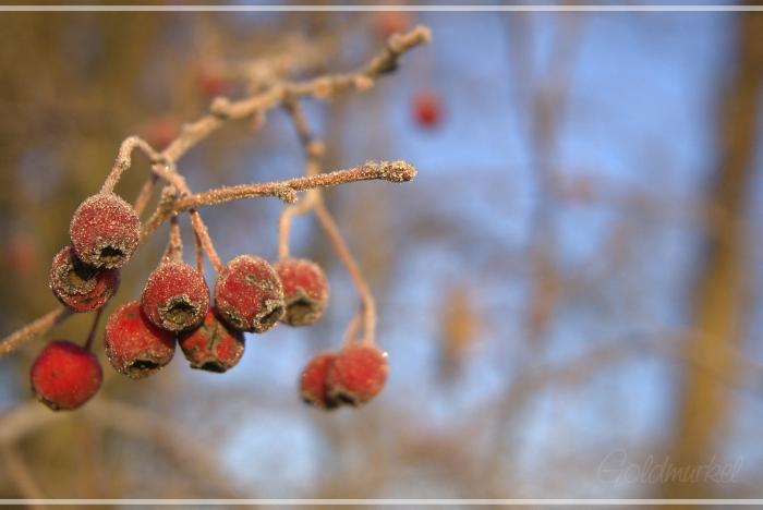 2019_02_17_Landschaft_6