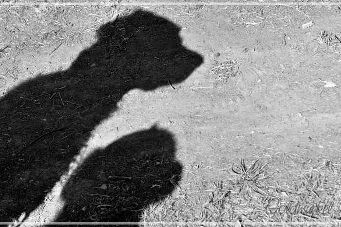 Schatten_1