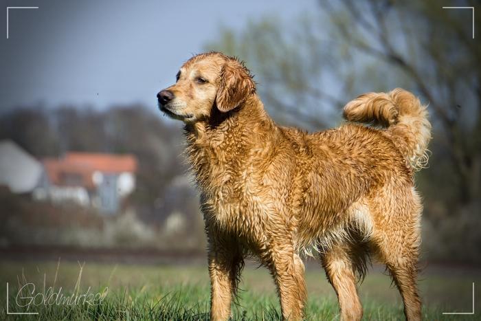 Hundohnepfoten